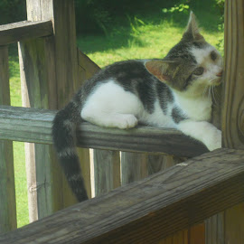 Peep eye...I see you!!! by Kathy Still - Animals - Cats Playing ( playing, kitten, deck )