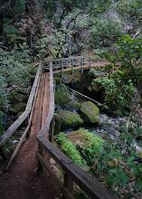 Photo: Cataract Trail, Mt. Tamalpais