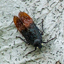 Tea-Dipped Cicada