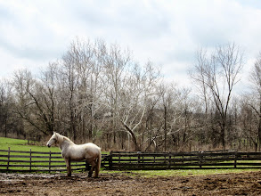 Photo: A white horse silvery in the early spring sun at Carriage Hill Metropark in Dayton, Ohio.