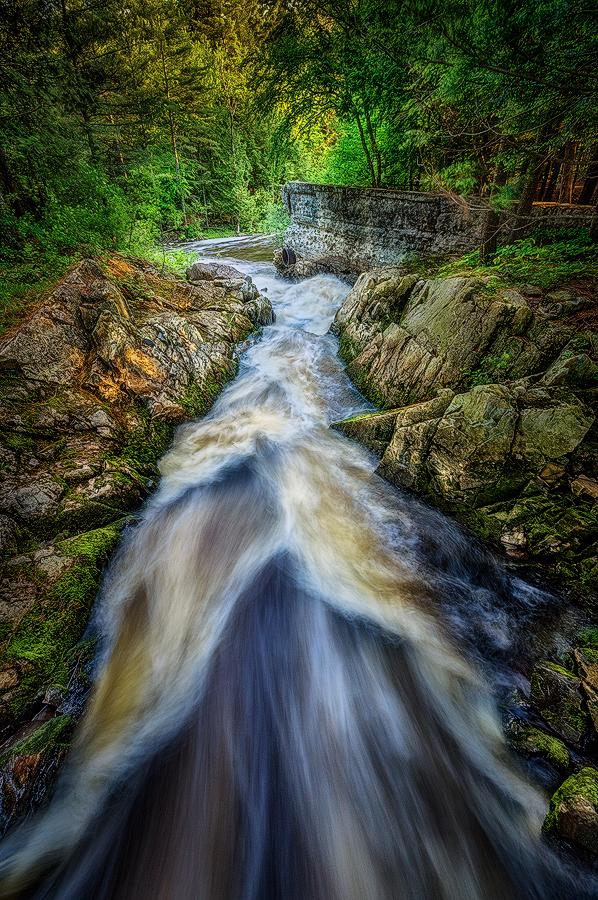 untitled by Dragan Milovanovic - Nature Up Close Water