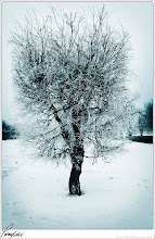 Photo: lonly tree, in the cold winter! what can i say.