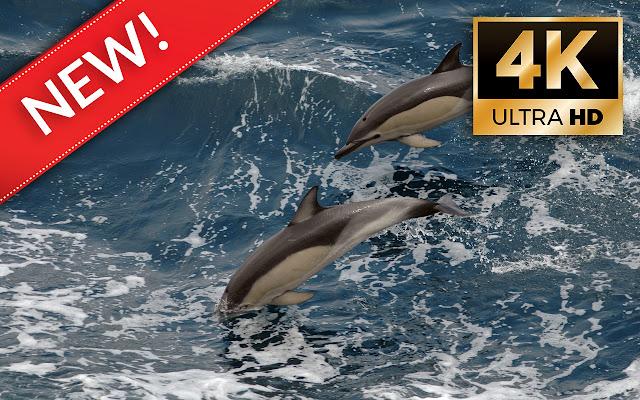 Дельфины Обои HD / 4K Дельфины Темы