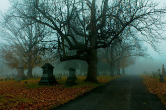 Photo: #18 Mourning Mist