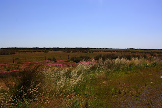 Photo: Year 2 Day 149 - Our Rural Scenery Today