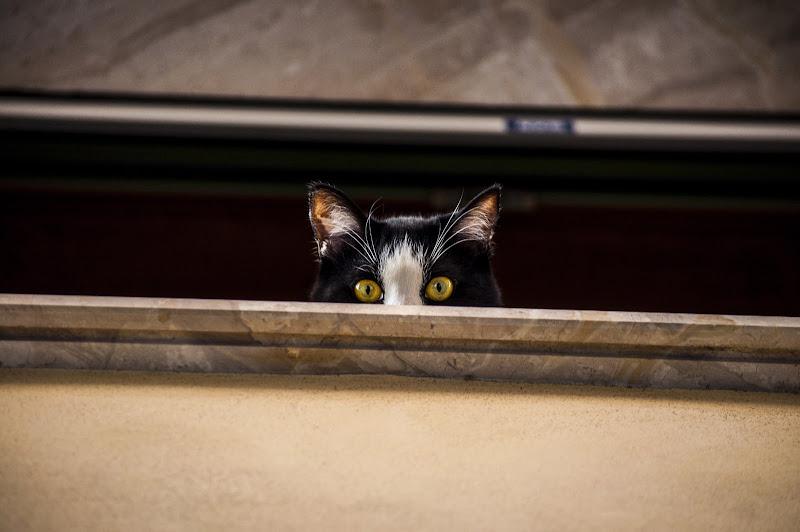 Ti vedo di http://www.andreabastia-photo.com/