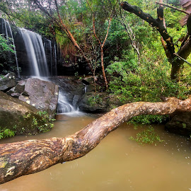 Natural Bridge by Geoffrey Wols - Landscapes Waterscapes ( forest, green, rocks, waterfall, bush, water,  )
