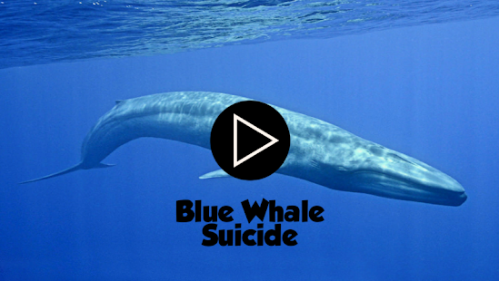 Game Blue Whale Suicide APK for Windows Phone