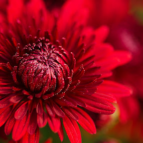 by Gourab Mitra - Nature Up Close Flowers - 2011-2013