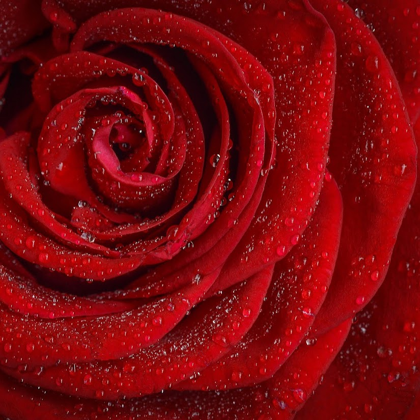 Qué regalar para San Valentín: ideas para todos los gustos