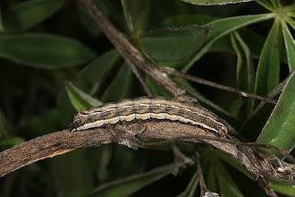 Photo: Caterpillar, DHG