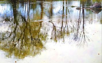 Photo: River Reflection Fall