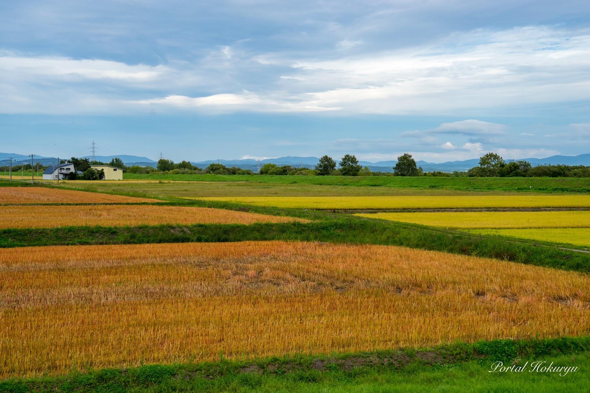 秋色に色づく田畑