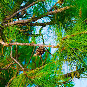 Lonley Pinecone by James Newberry - Nature Up Close Trees & Bushes ( pinecone, nature, tree, colorful, pine tree, greenery, outdoors, vibrant, pine )