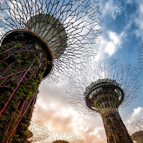 Steel Tree Colony by Mario Wibowo - Buildings & Architecture Bridges & Suspended Structures ( studio, mario, 2013, kelapa gading, wibowo, travel, trip, cityscape, mwp, singapore )