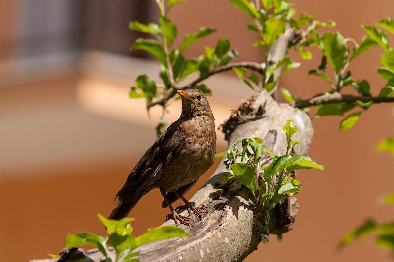 Uccello vanitoso di Andrea Calò