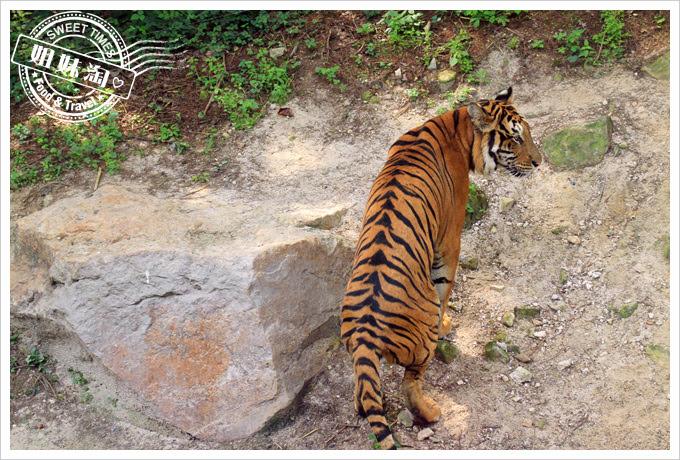 Safari World野生動物世界