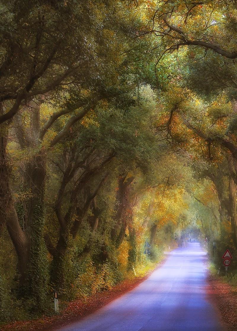 La strada bolgherese di giangale