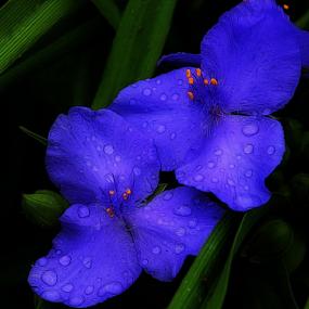 by Joyce Williams Carr - Flowers Flower Gardens