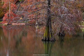 Photo: Zona del lago del Palacio de Cristal de El Retiro, Madrid. Filtros: Polarizador