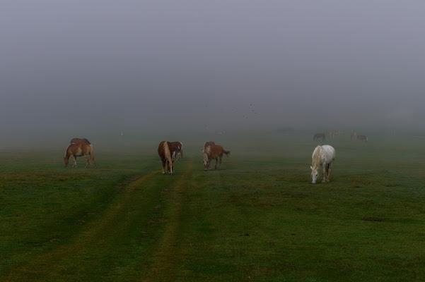 horses in the fog di Ltz/rivadestra