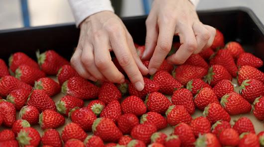 Fruit Attraction analiza el sector del fruto rojo
