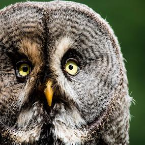 by Ralf  Harimau - Animals Birds ( greifvogelpark, saarburg )
