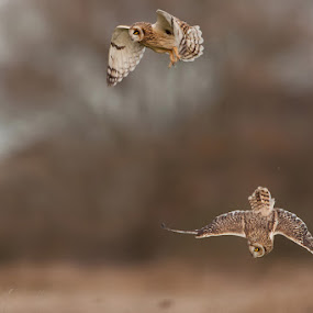 by Howard Kearley - Animals Birds