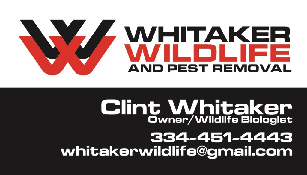 whitaker wildlife and pest removal services