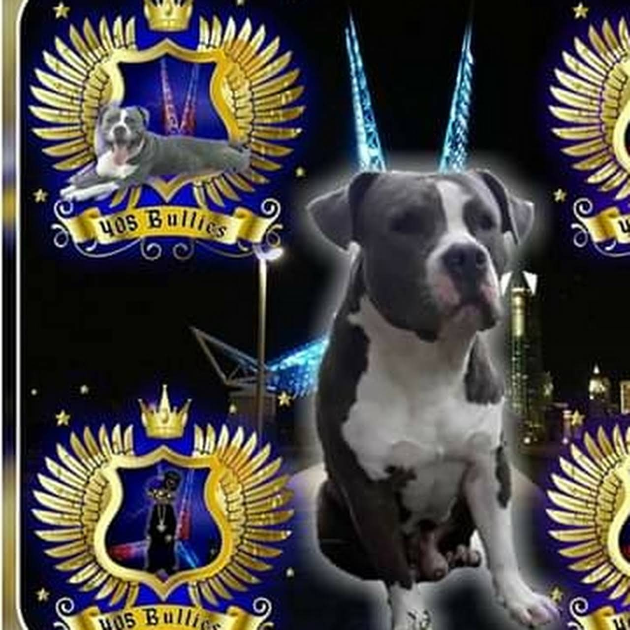 405 Bullies Kennels - American Bully Breeder in Oklahoma City