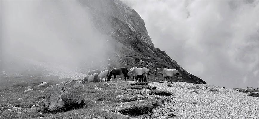 Cavalli al pascolo di adimar