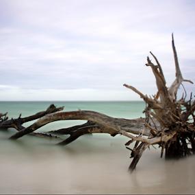 Gulf Of Mexico  by Jeremy Barton - Landscapes Beaches ( wood, tree, florida, longboat key, sea, gulf of mexico, usa,  )