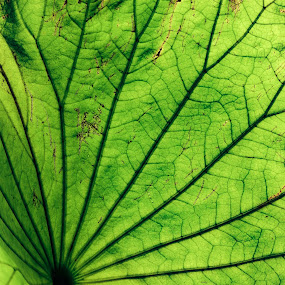 underside of a leaf by Rebecca Pollard - Nature Up Close Leaves & Grasses (  )