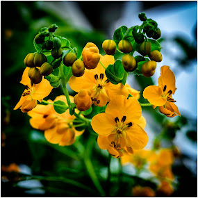 by David Bevan - Flowers Flower Gardens