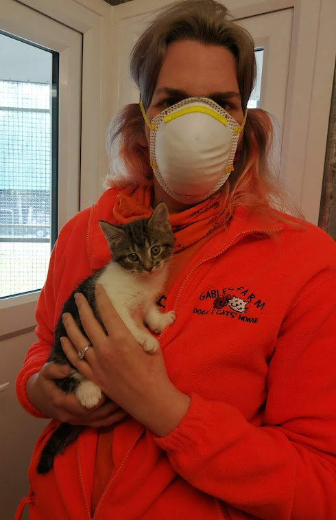 Member of staff with kitten
