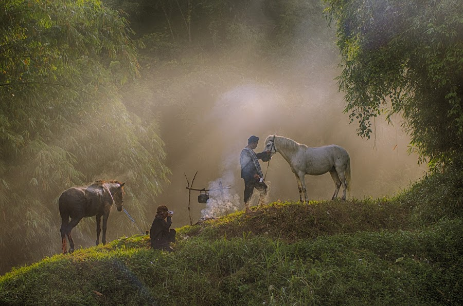 One moment in the morning by Tamlikho Tam - Animals Horses