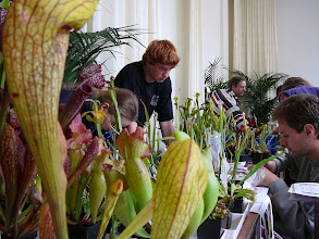 Photo: Sales booth with Sarracenia at the EEE 2007.