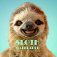 Sloth Animal Wallpaper Download on Windows