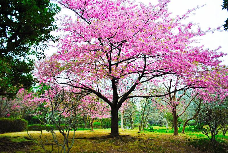 World is pink! di Babemc