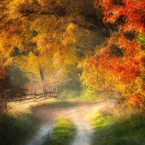 My autumn... by Joanna Maciszka - Landscapes Forests