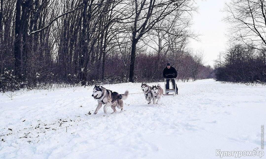 dFxcG3thSCXuztfEyKfkfWl4_CFHHdxFAlVu7txOzo2Ty2-i4uwHuUQefvGW5YRPmsHfDVvno_qevFs=w1440-h810-no Одесские экстремалы отрываются на снегу по полной программе