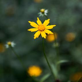by Brook Kornegay - Flowers Flowers in the Wild (  )