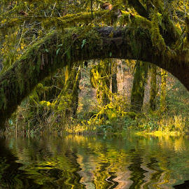 Hoh Rainforest Arch by Kathy Suttles - Digital Art Places (  )