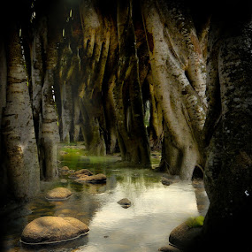 The Mysterious Forest Lake by Babor Ali Khan - Nature Up Close Trees & Bushes ( tree )