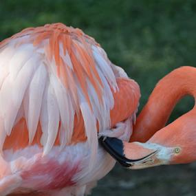 by Randy Wilkinson - Animals Birds ( , #8rtcoMagazine )