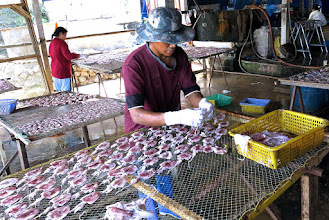 Photo: arranging cleaned squid on wire racks to dry, Pranburi marina