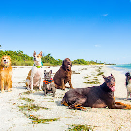 The beach crew by Meaghan Browning - Animals - Dogs Portraits ( water, breed, dogs, ocean, beach, pack, dog, variety )