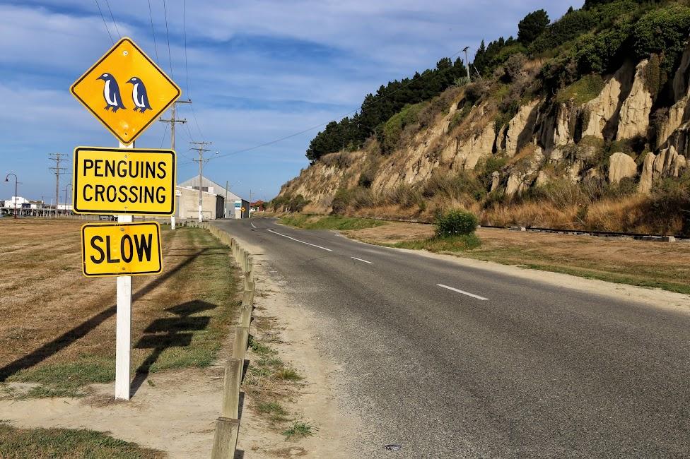 Znak drogowy z pingwinem w Oamaru - Nowa Zelandia