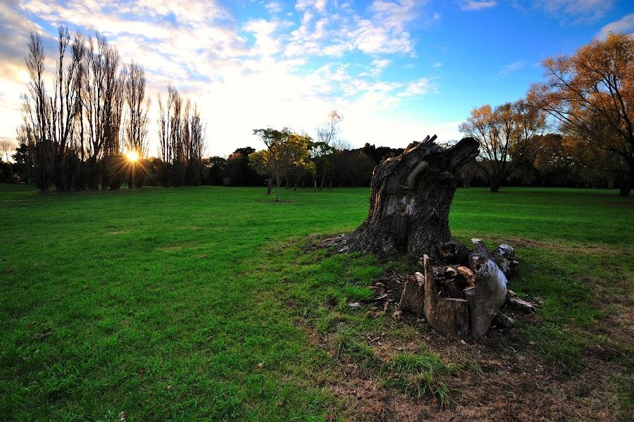 Waitoetoe Park by Nadly Aizat Nudri - Landscapes Prairies, Meadows & Fields