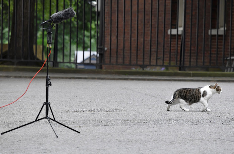 Larry the Downing Street cat walks past a TV correspondent's microphone stand in London.